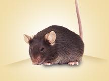 TurboKnockout<sup>®</sup> Gene Targeting 마우스