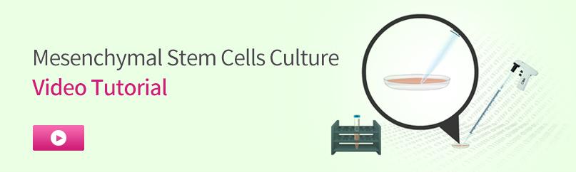 Mesenchymal Stem Cells Culture