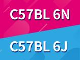 C57BL/6N 마우스와 C57BL/6J마우스의 차이점이 무엇일까?