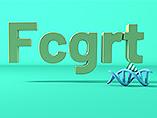 [Gene of the Week] 면역 연구에서 인기 있는 유전자인 Fcgrt