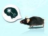 동물 모델을 이용한 신경 퇴행성 질환 연구