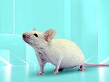 [문헌 정독] 장상피세포가 MHC II와 PD-L1의 발현을 통해 상피내 림프구 분화를 조절한다.