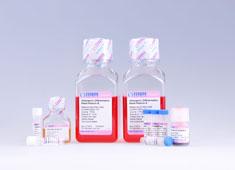 Mesenchymal Stem Cell Adipogenic Differentiation Medium GUXMX-90031