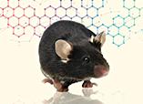 인기 연구 분야 관련 유전자